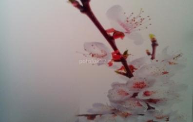 Фотопечать на потолке сакура - работы студии Потолок32